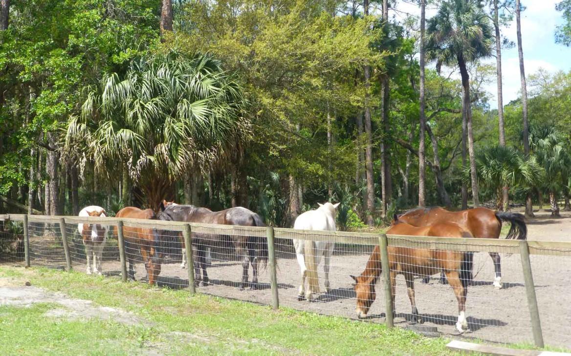 Florida Mustang Rescue: Als Volunteer Amerikas Wildpferde schützen