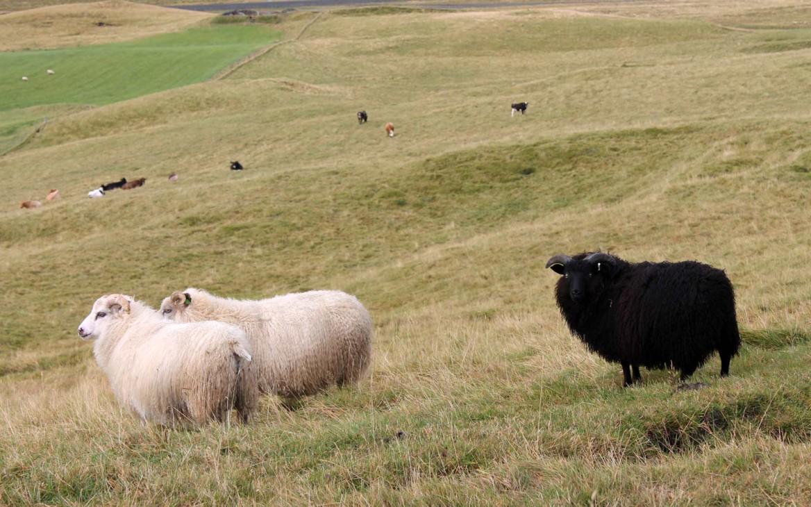 Farmarbeit Island: Einsamkeit und Abenteuer im Land der Geysire
