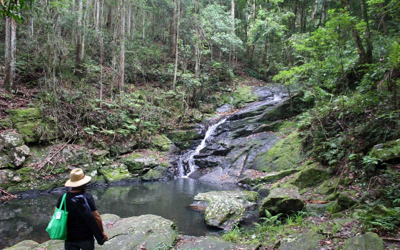 Wasserfall Regenwald Australien