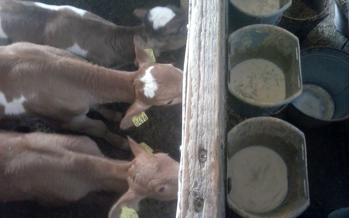 Farmarbeit Island: Justins Zeit auf der Vulkaninsel