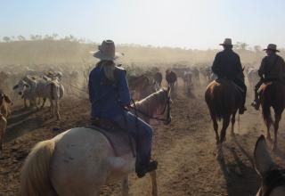 Farmarbeit in Australien: Wendy oder doch lieber John Wayne?