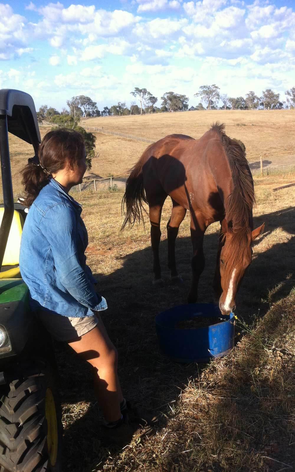 Pferd füttern auf der Weide