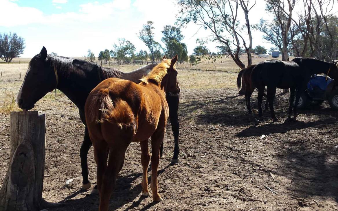 Farmarbeit Australien: Wendy oder doch lieber John Wayne?