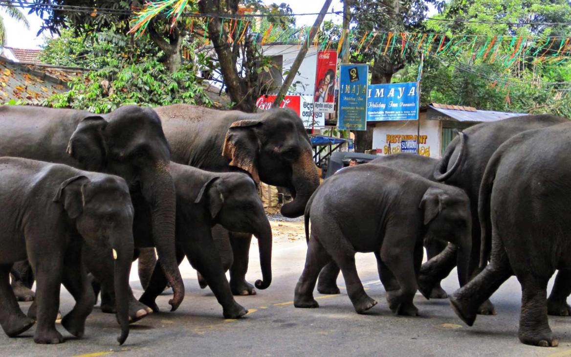 Ab ins Paradies: Top 10 Sehenswürdigkeiten auf Sri Lanka