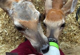 Denise in Kanada #1: Erste Eindrücke vom Wildlife-Projekt