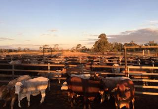 Justin in Australien #1: Ein neues Farm-Abenteuer