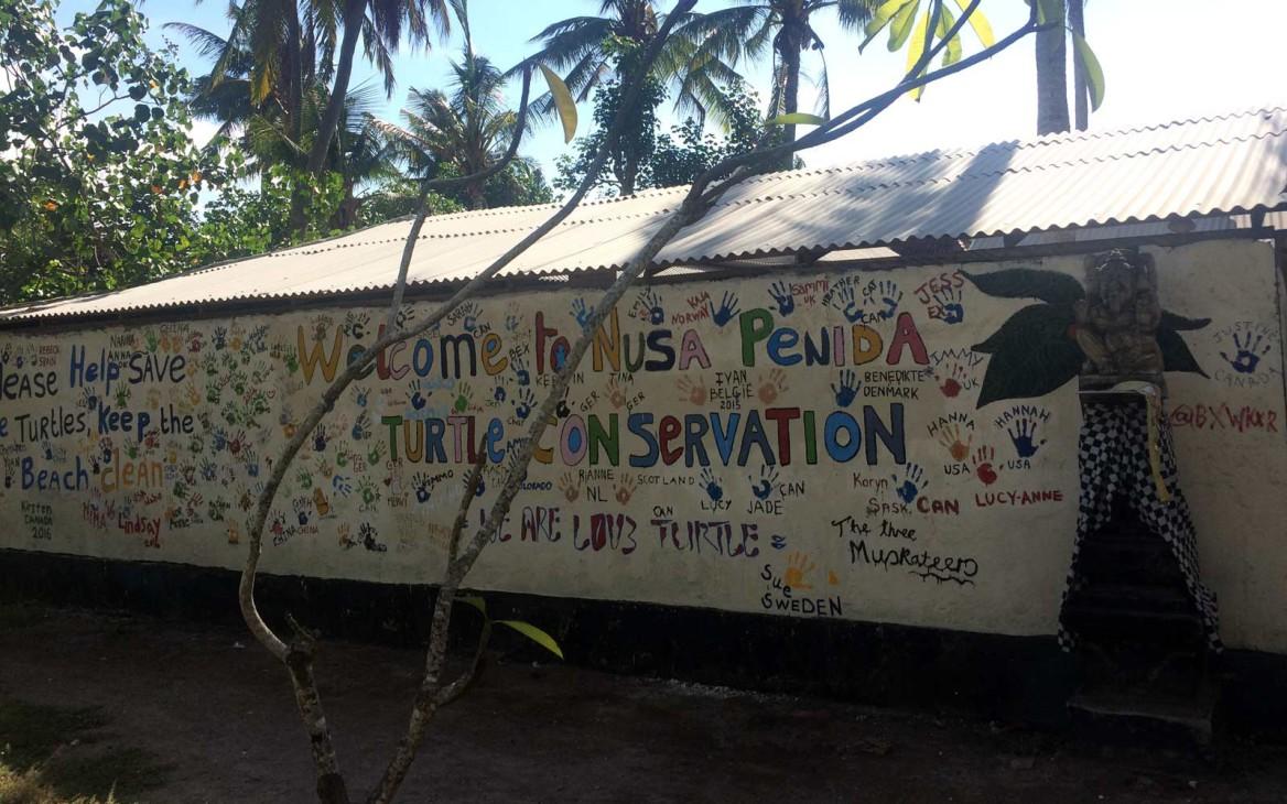 Freiwilligenarbeit Indonesien: Leonies Zeit im Schildkröten-Projekt