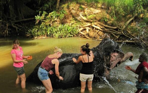 Elefant waschen auf Sri Lanka