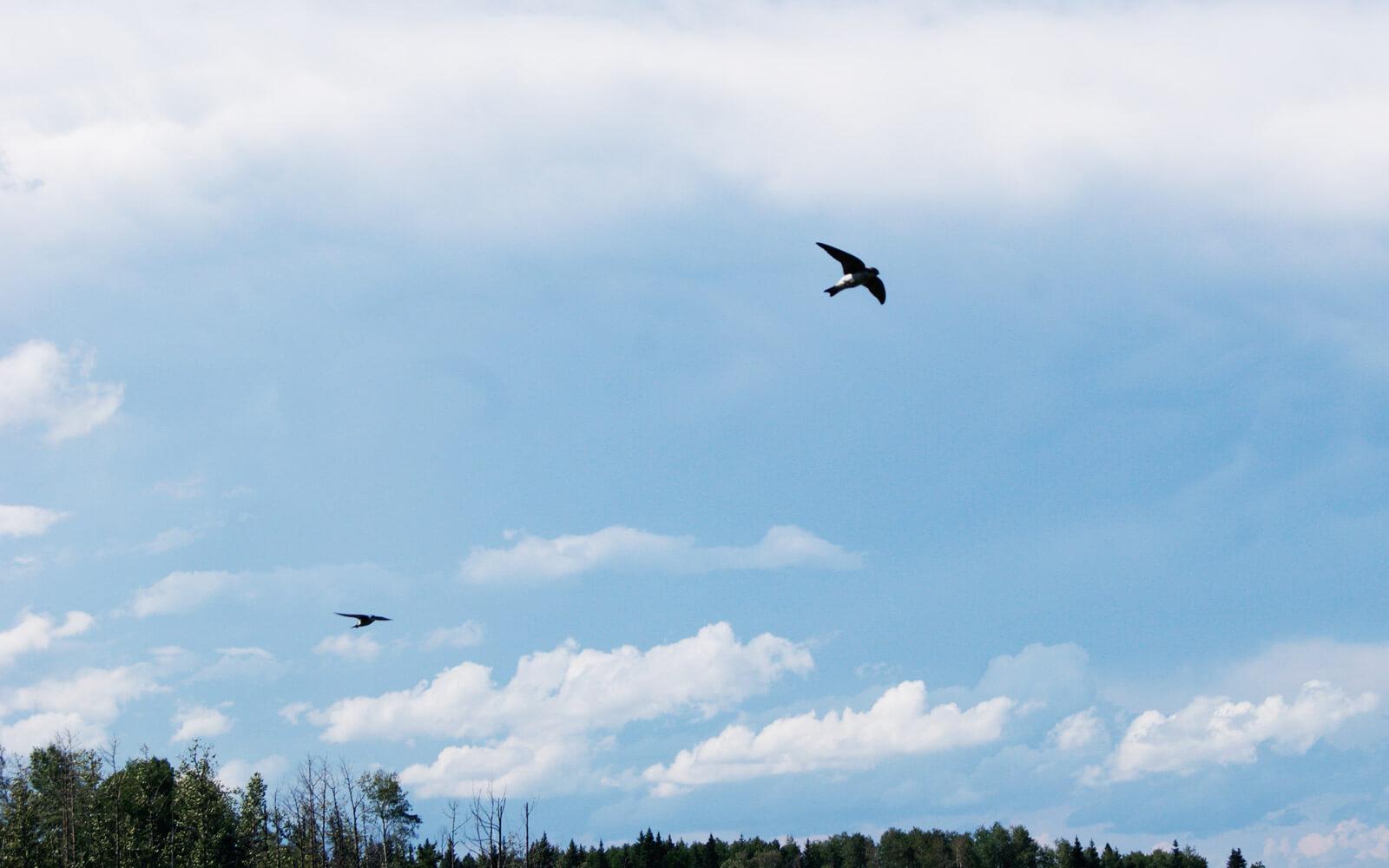 Vögel im blauen Himmel