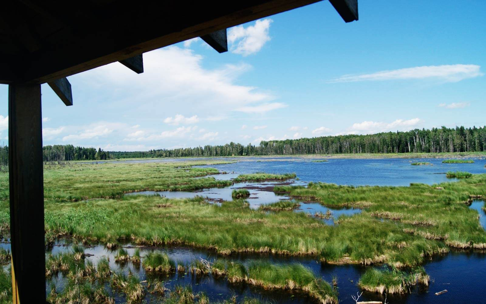 Wetlands in Alberta, Kanada