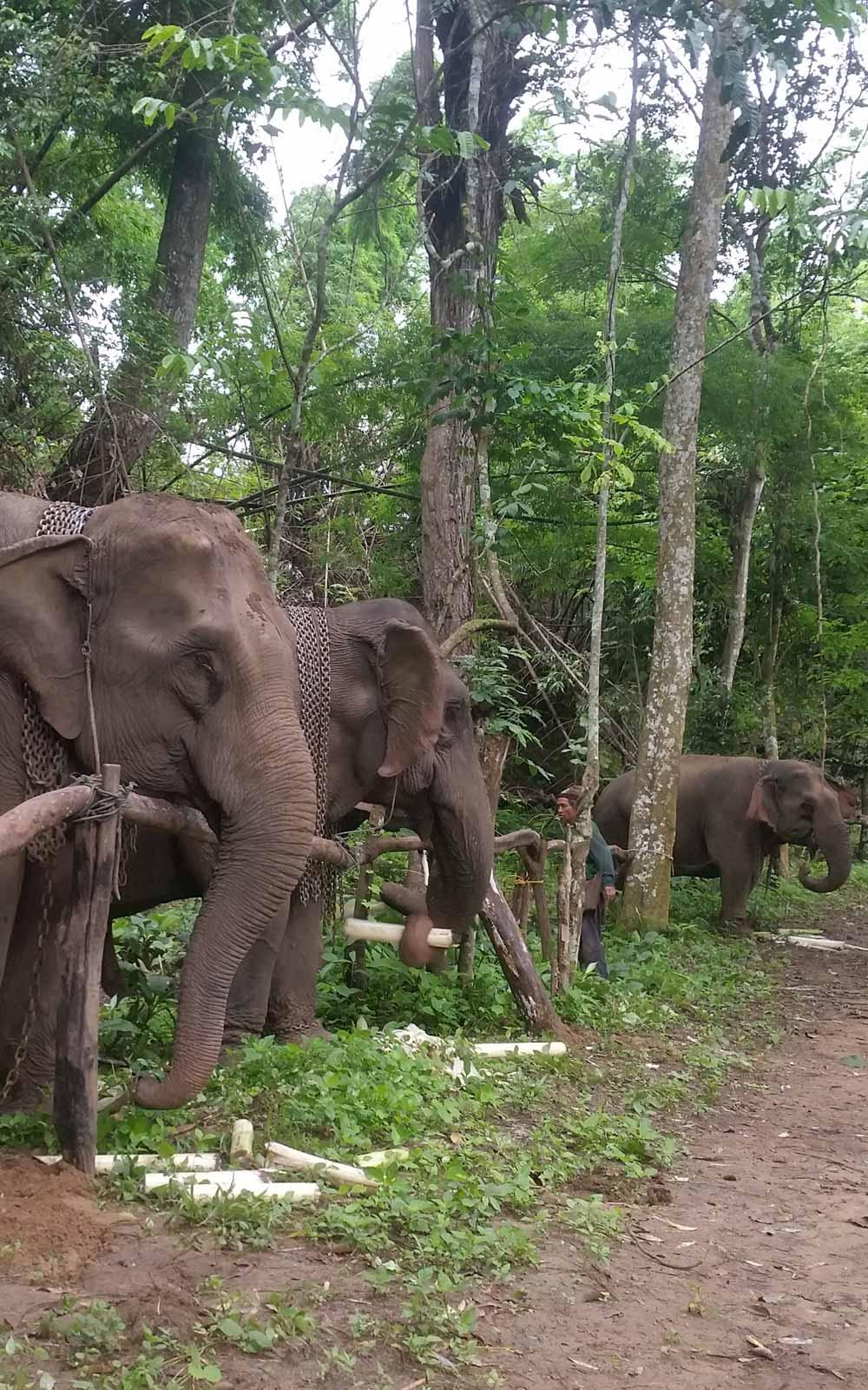 Elefanten im Elefantenprojekt in Umphang, Thailand