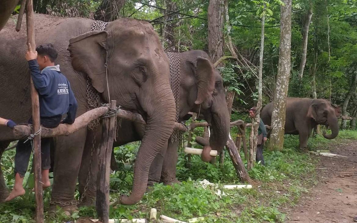 Verena in Thailand #3: Elefanten füttern in Umphang