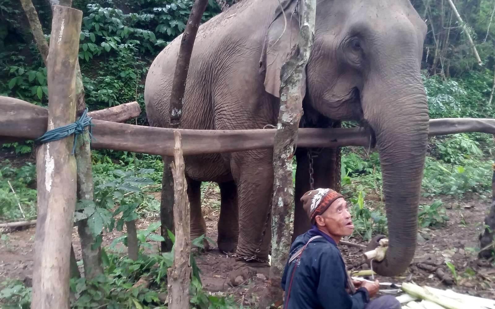 Elefant mit seinem Mahout in Thailand