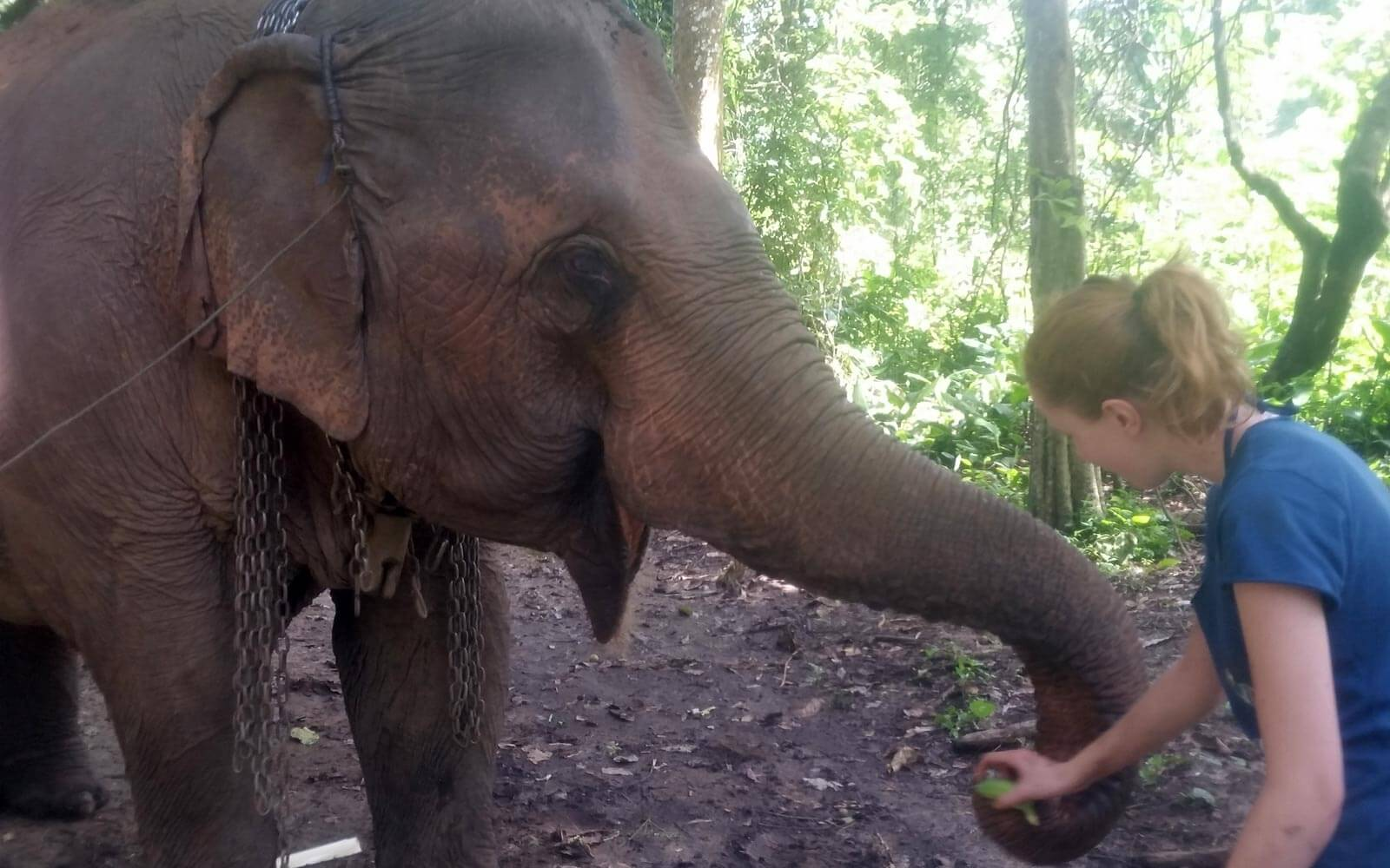 Elefanten Füttern in Thailand