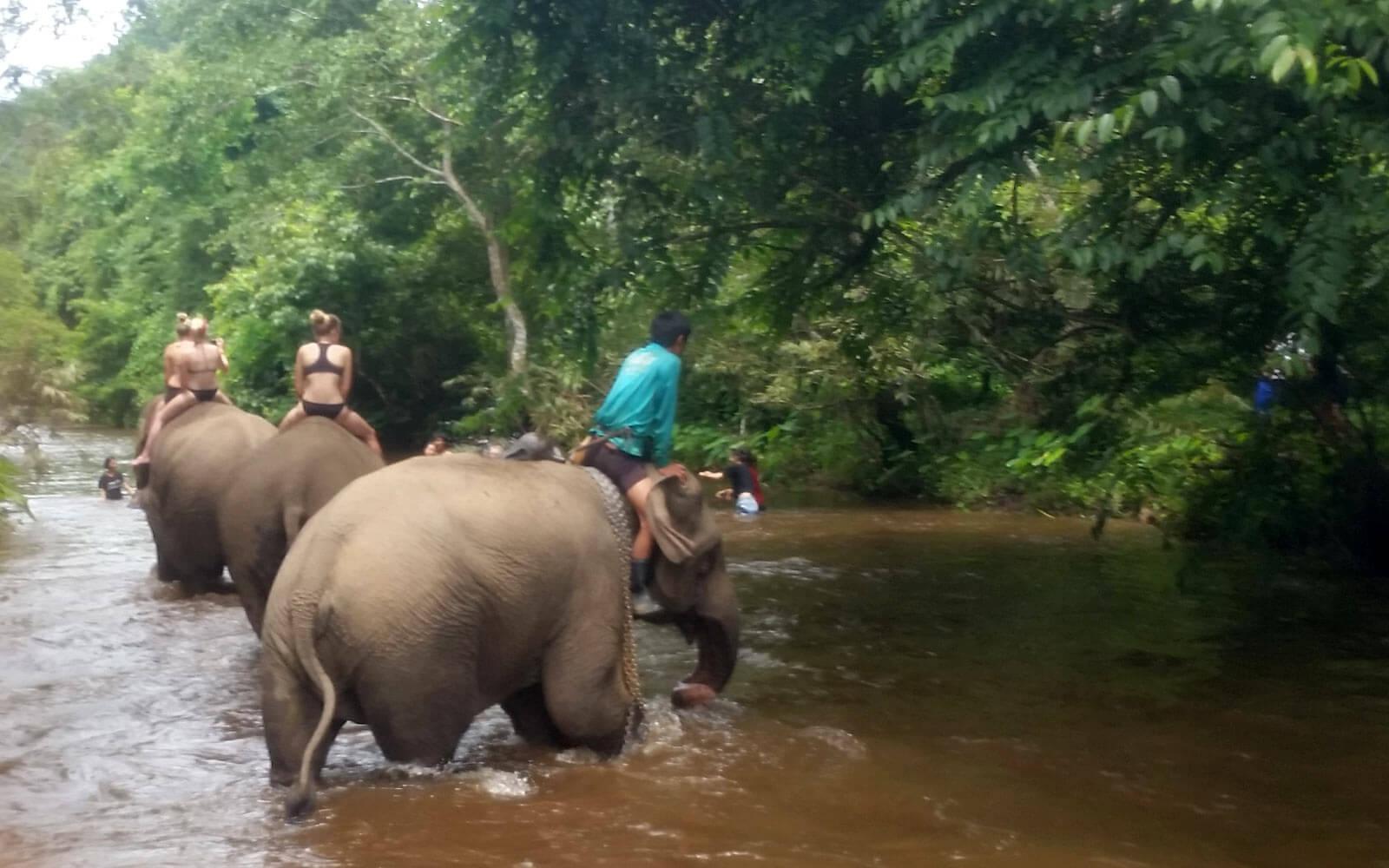 Elefanten baden im Fluss Thailand
