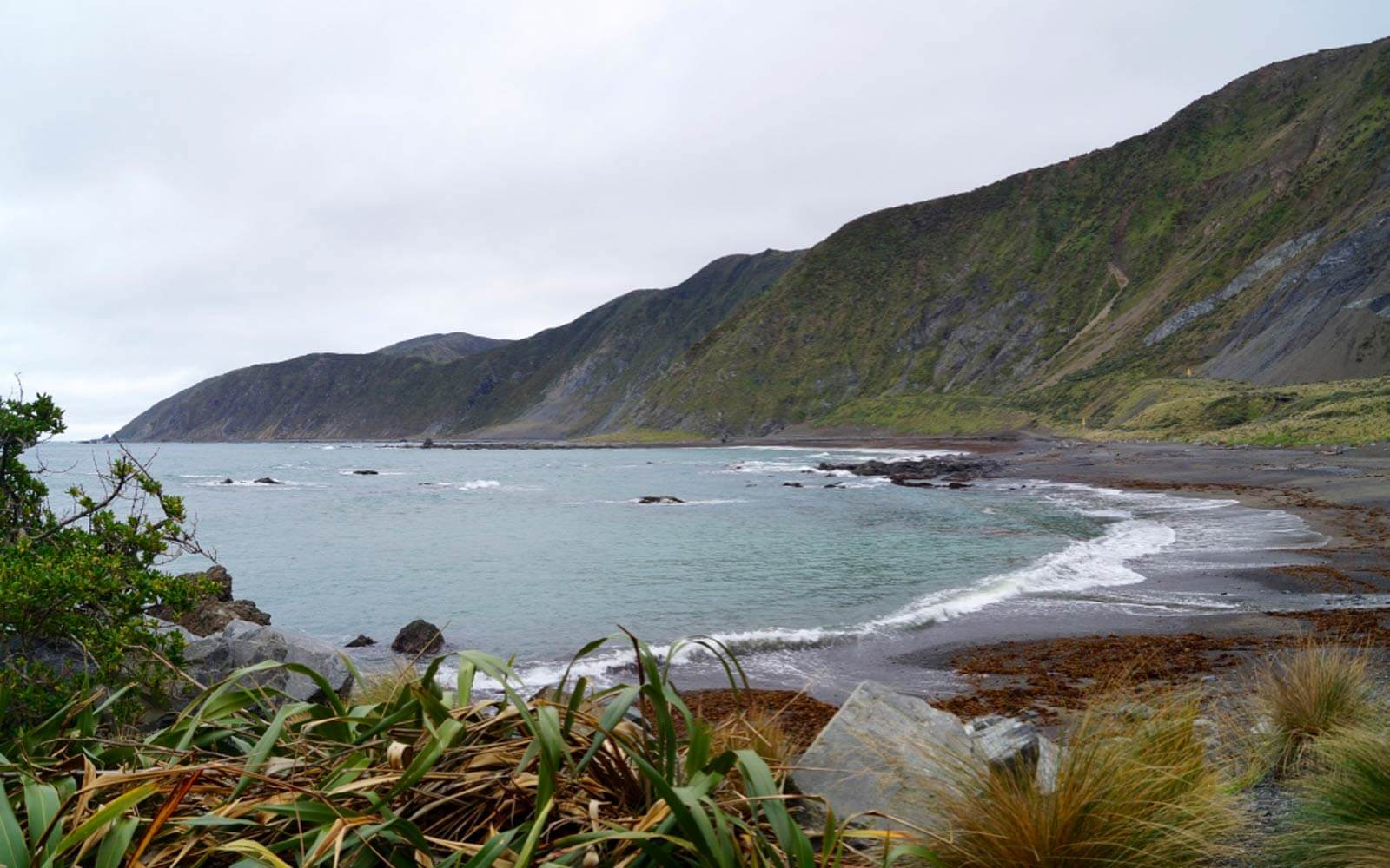 Red Rocks Reserve in Wellington, Neuseeland