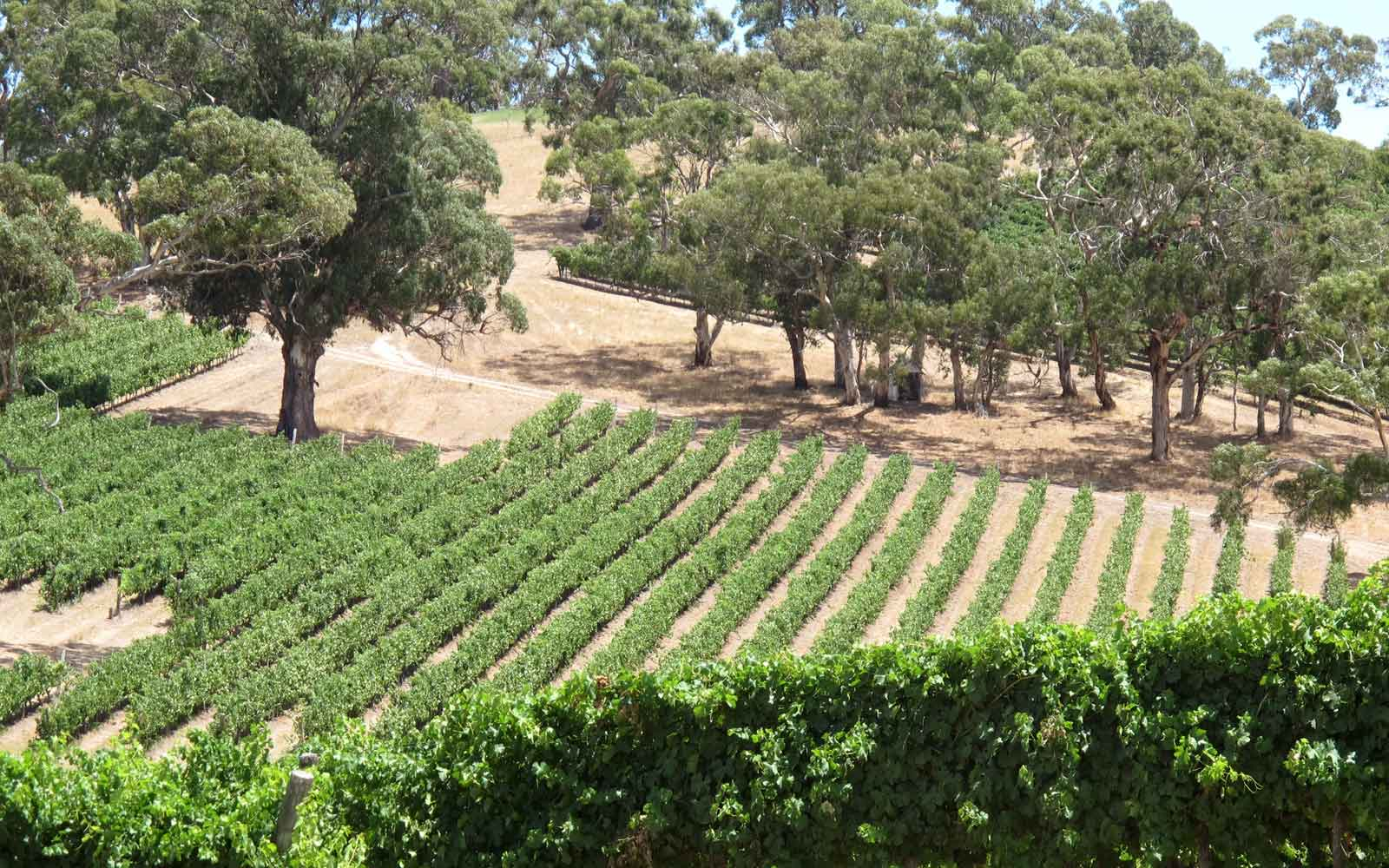 Adelaide Hills Longview Winery