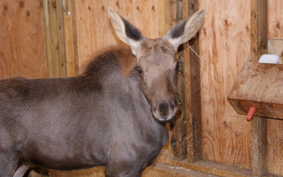 Denise in Kanada #3: Wetlands, Calgary & Education Animals