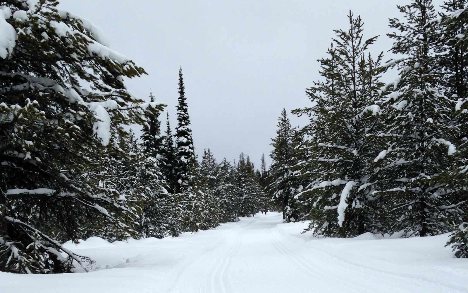 Schnee im Wald in Montana, USA
