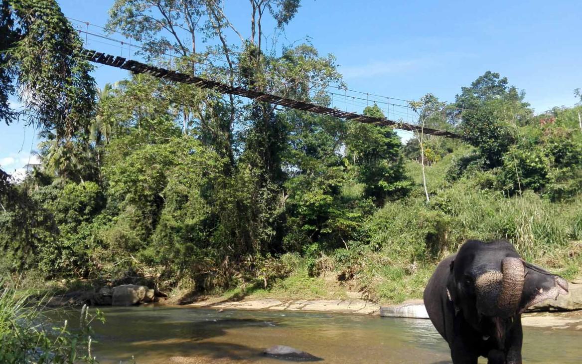 Freiwilligenarbeit Sri Lanka: Ein unvergessliches Volunteer-Abenteuer