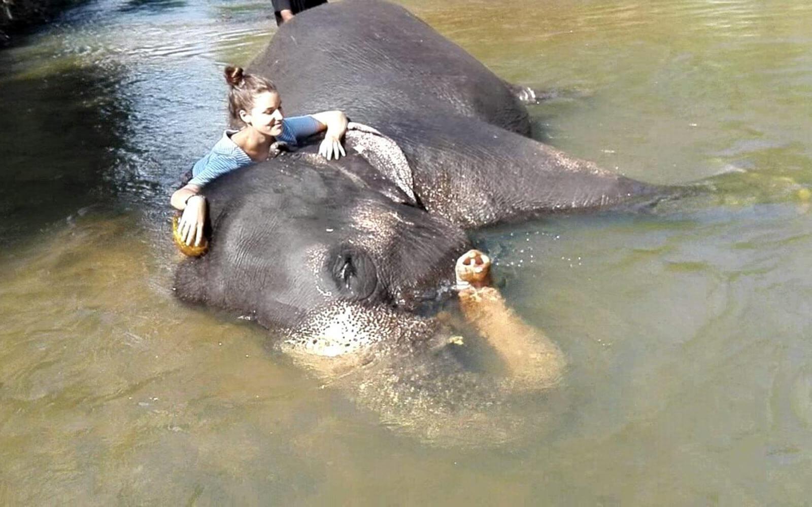 Samira putzt Elefant auf Sri Lanka