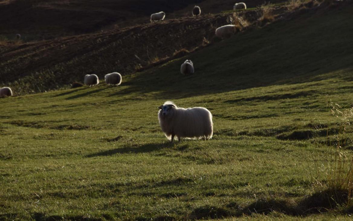 Stina in Island #1: Vorbereitung zu Farmarbeit