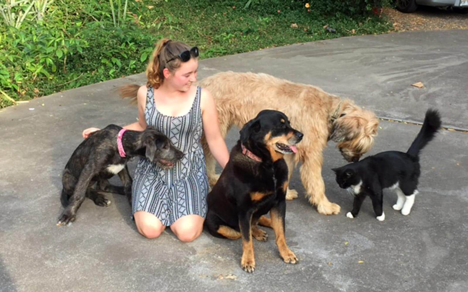 Volunteer Susanne umringt von Hunden und Katzen