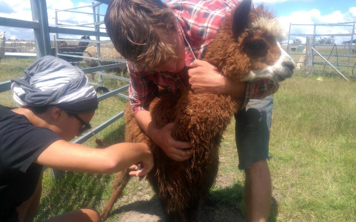 Justin in Australien #6: Update aus Down Under