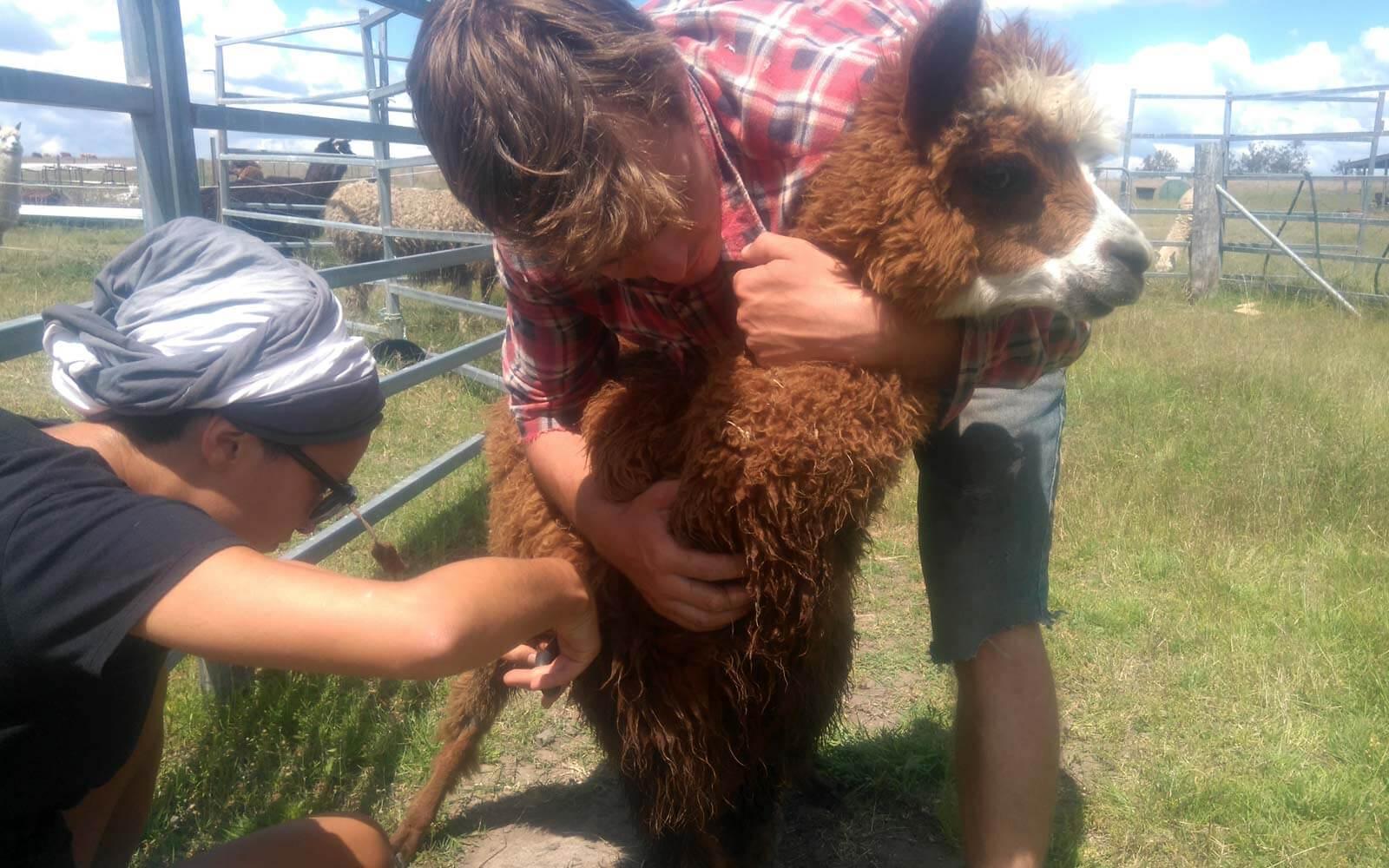 Justin bei der Farmarbeit in Australien