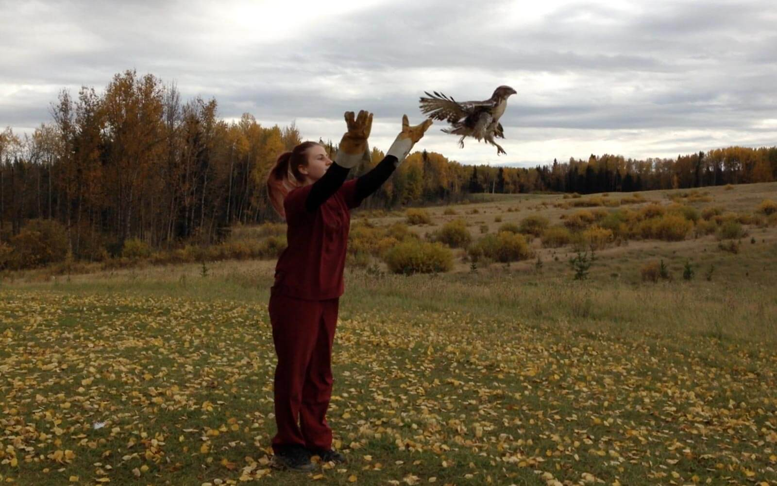 Wildlife Release in Kanada