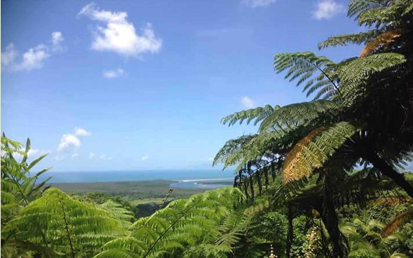 Natur bei Cairns