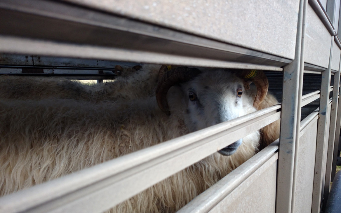 Stina in Island #4: Mein typischer Tagesablauf auf der Farm