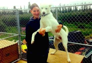 Anja in Kanada #3: Die weißen sibirischen Huskys