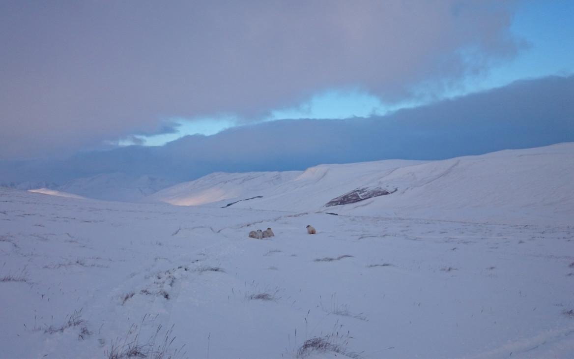 Stina in Island #6: Der Winter kommt mit aller Macht!
