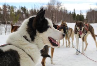 Steffi in Norwegen #4: Oh wie schön ist Norwegen!