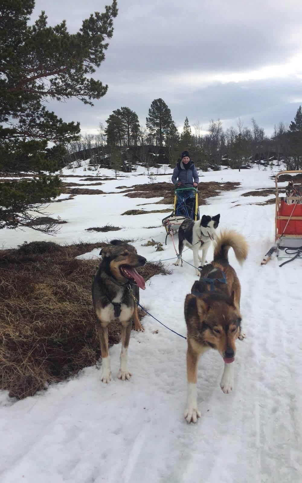 Steffi auf dem Hundeschlitten