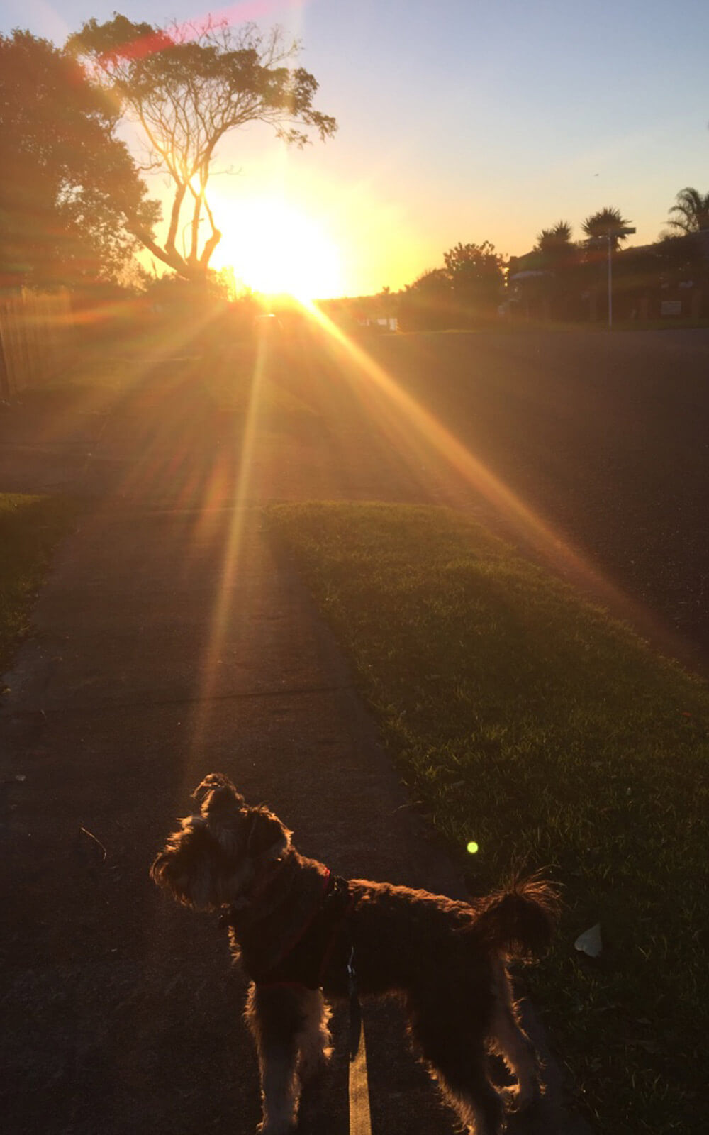 Spaziergang mit Rufus bei Sonnenuntergang