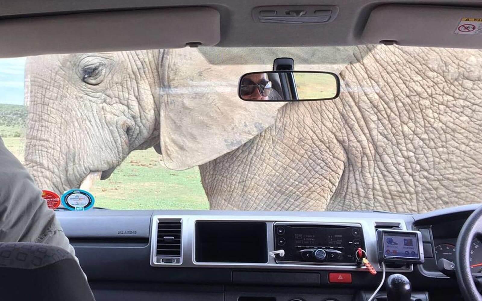 Freiwilligenarbeit Südafrika: Elefant vor Aarons Auto