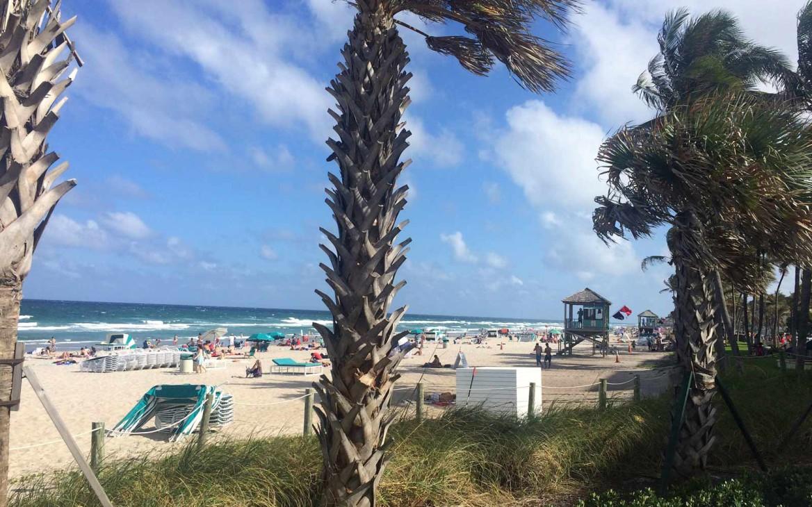 Freiwilligenarbeit Florida: Ein Traum wird wahr!