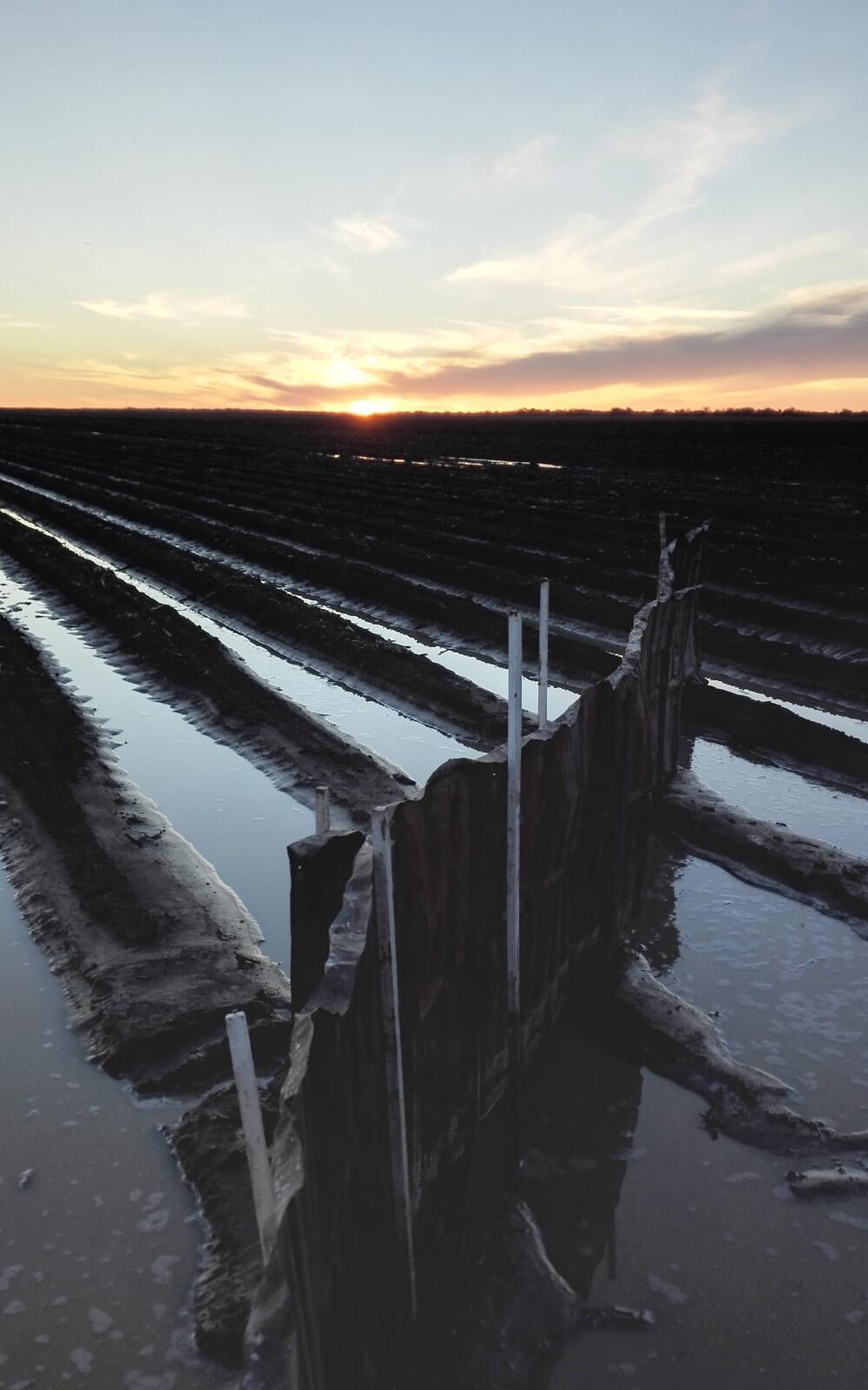 Ein mit Wasser geflutetes Feld