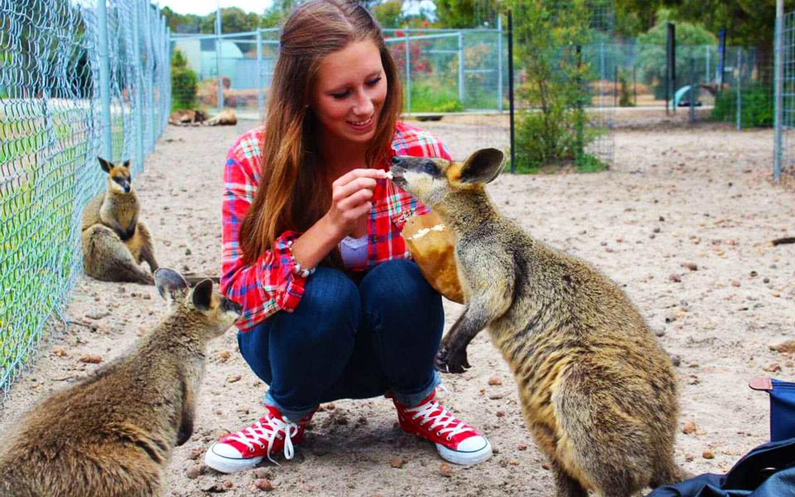 Jana füttert Kängurus