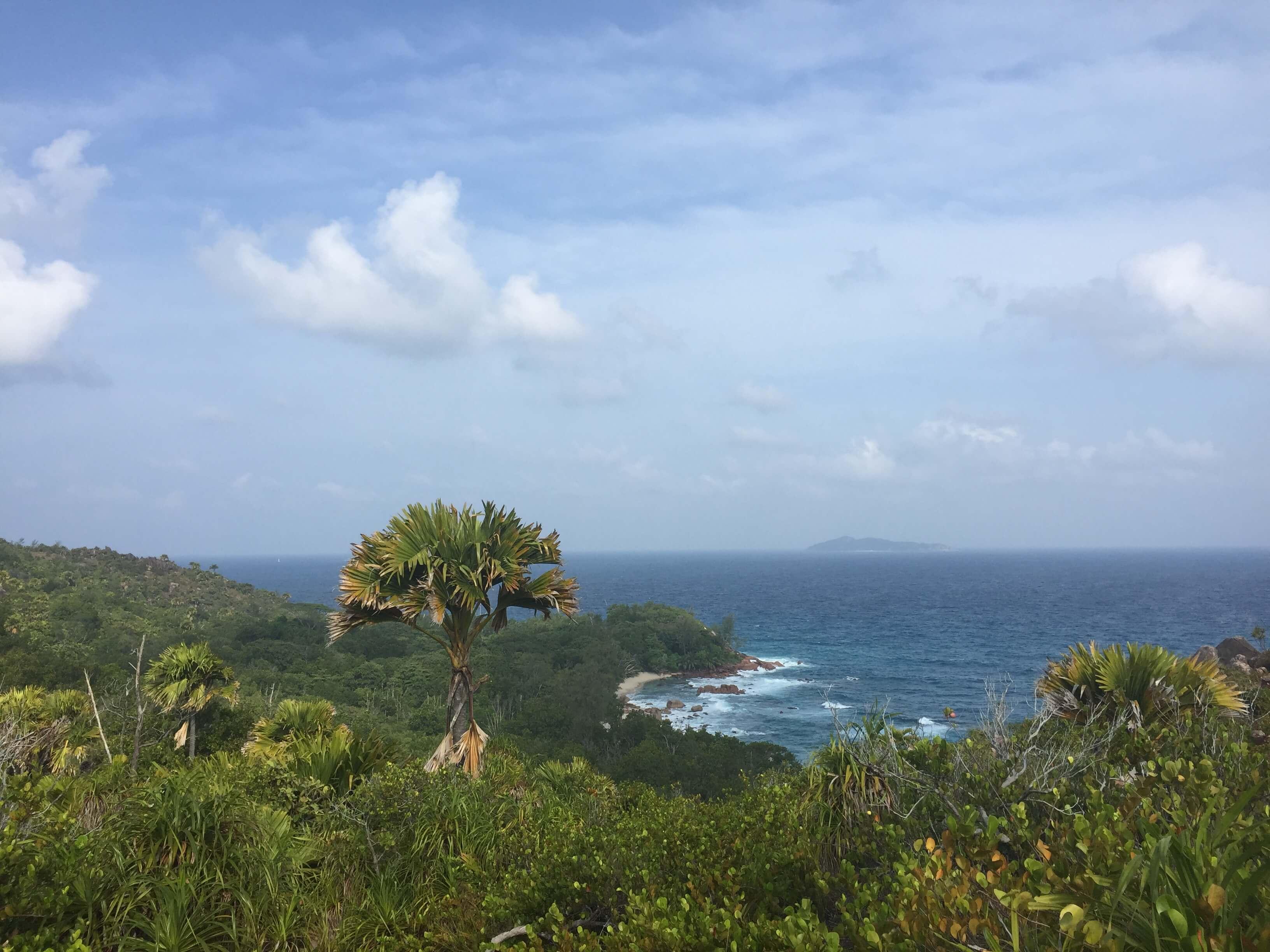 Überblick auf Wald und Meer auf den Seychellen