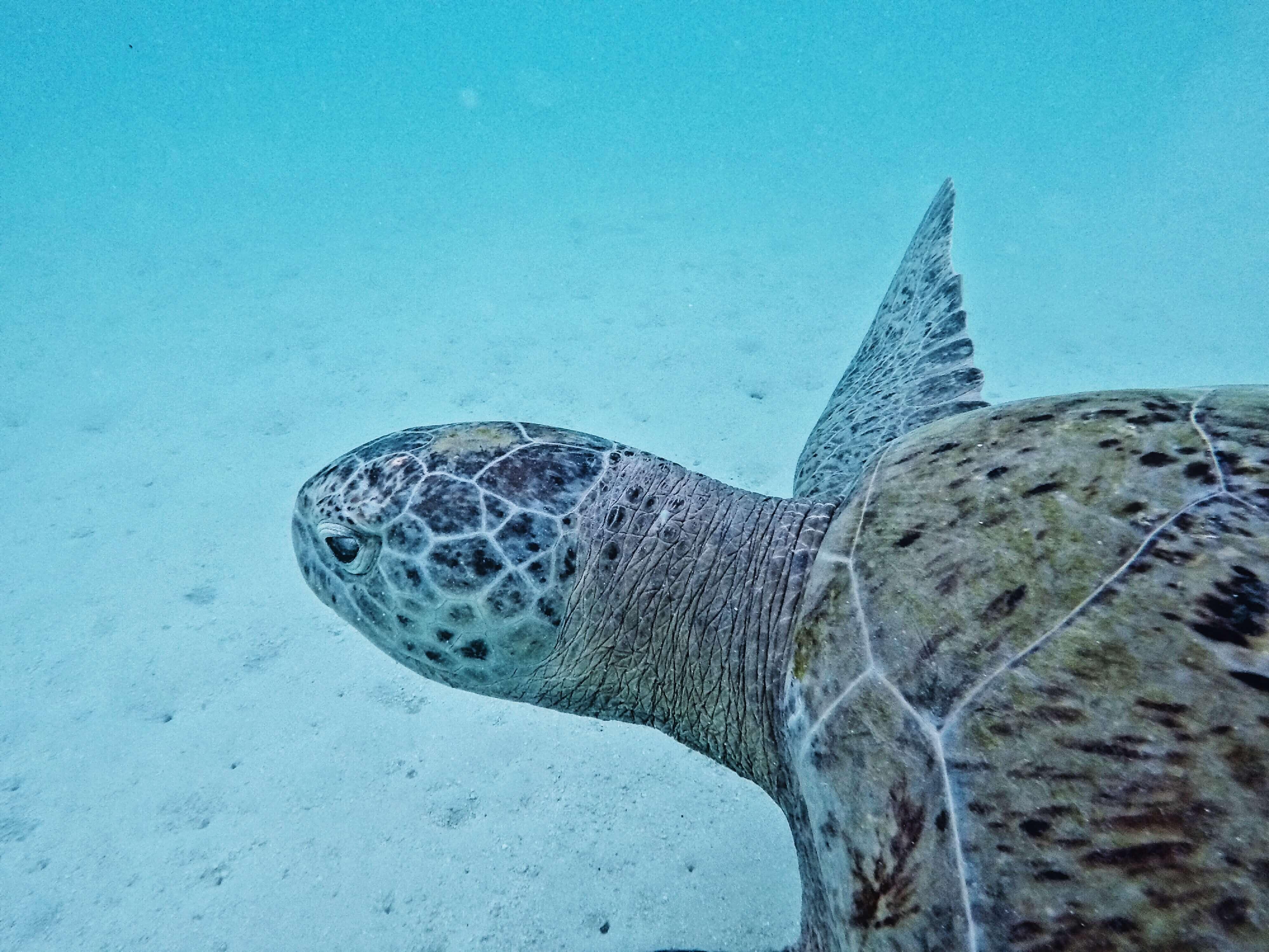 Unterwasserwelt: auf Tuchfühlung mit einer Meeresschildkröte